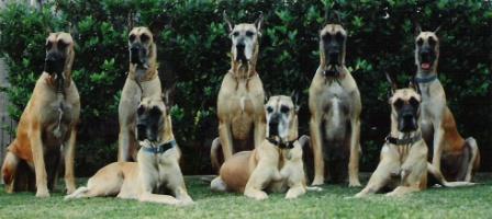 Dane Family