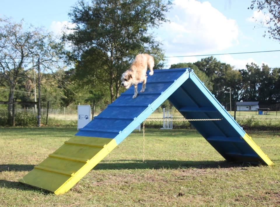 Agility | Havenlea Dog Training Centre